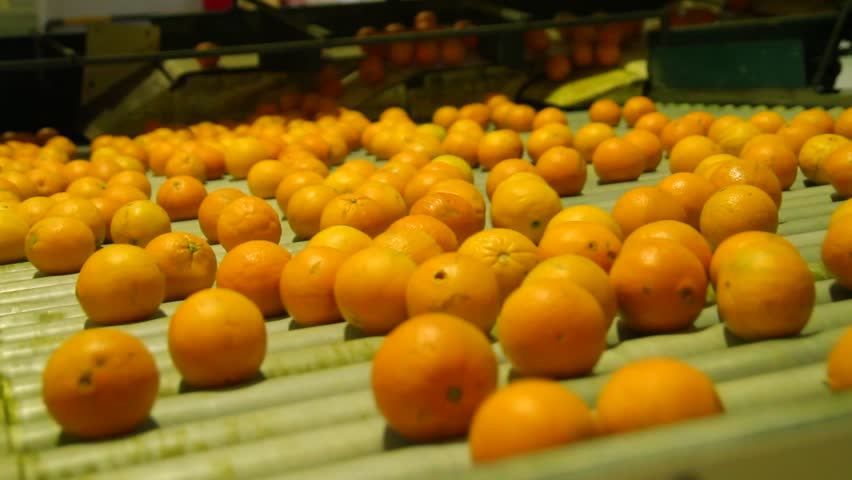 Oranges rolling on grading and sorting machine in industrial packaging plant   Shutterstock HD Video #1028213681