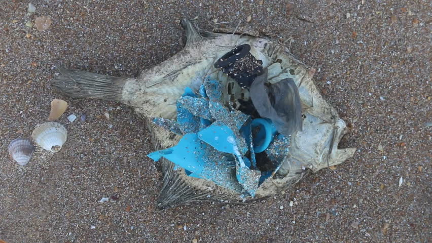 Dead dry fish on seashell beach in Black sea. Sea pollution toxic plastic garbage, plastic packing everywhere. Human industrial activity as plastic bag making machine. Earth protection concept