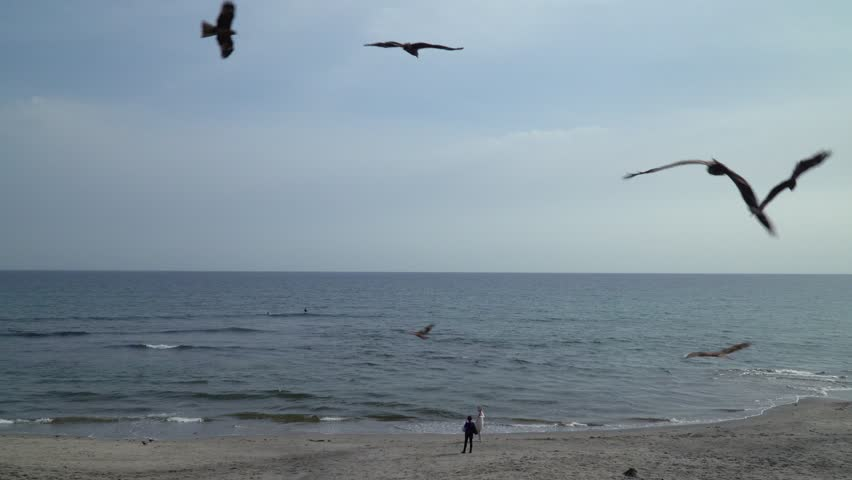 """KAMAKURA, KANAGAWA / JAPAN - APRIL 23 2019 : Landscape of the shore of """"Shichirigahama"""". Many birds are flying in the sky. Birds are trying to take food that tourists have. 