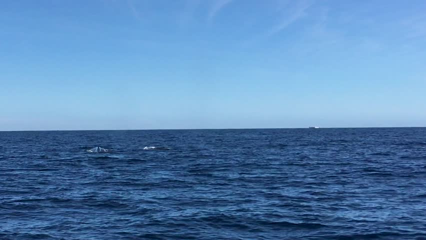 Three Humpback Whales Coming Out of the Water to Breathe and Show Their Tails in Cabo San Lucas #1028589227