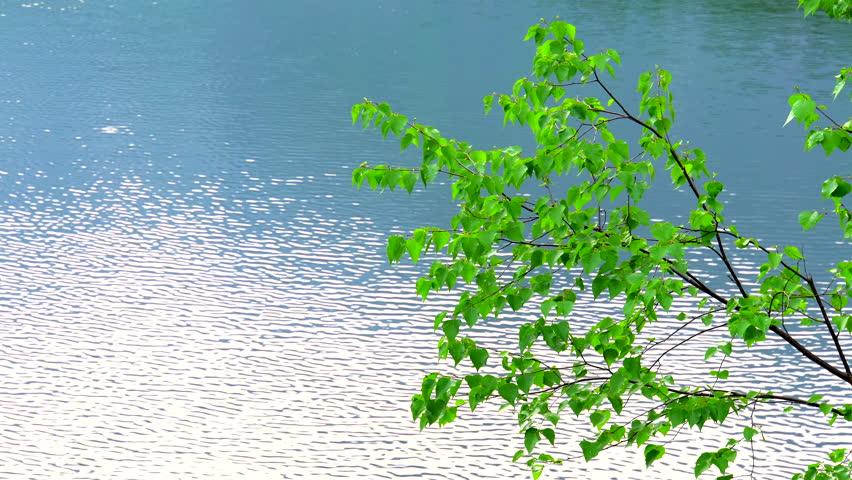Green branch lake background . | Shutterstock HD Video #1028608475
