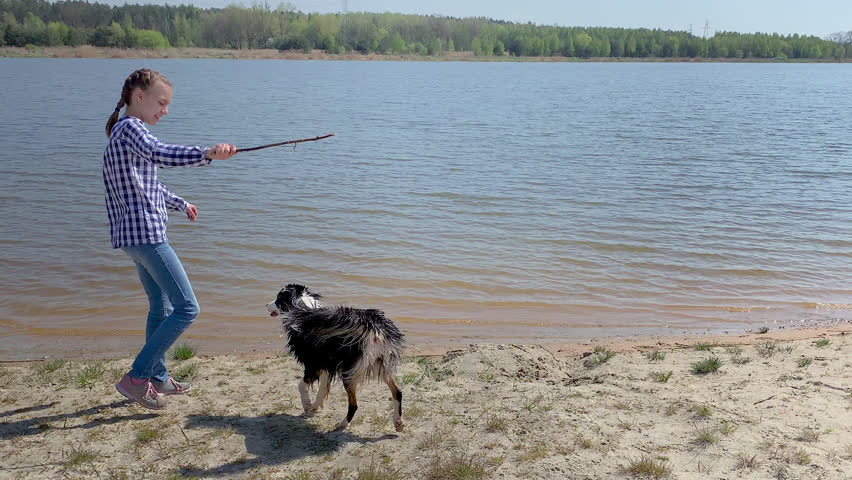 Happy teen girl play with dog on beach of river, throws her stick. Dog pulls stick out of water. Child faving fun with young Australian Shepherd dog outdoor. | Shutterstock HD Video #1028660297