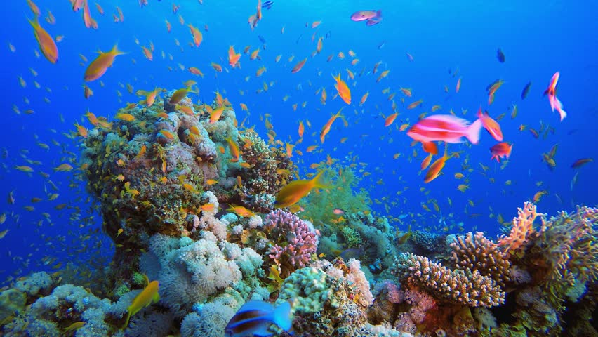 Underwater Colorful Tropical Fishes. Tropical underwater sea fishes. Underwater fish reef marine. Tropical colorful seascape. Underwater reef. Reef coral scene. Coral garden seascape. | Shutterstock HD Video #1028690741