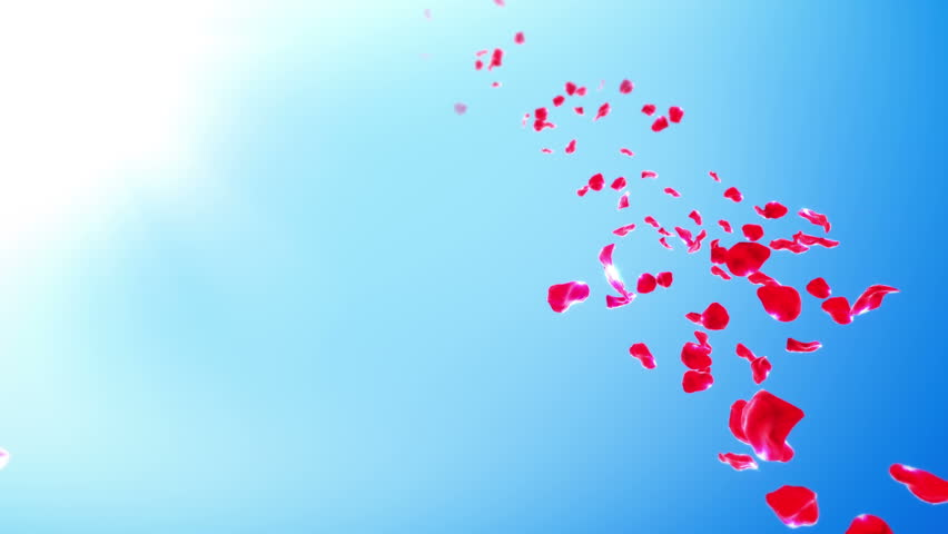 Rose Petals Sky Background (Loop) 4K. Calm background with flying red rose petals stream and copy space. Seamlessly loopable.  | Shutterstock HD Video #1028702066