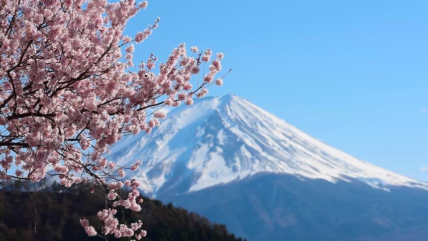 Mount Fuji and cherry blossoms which are viewed from lake Kawaguchiko, Yamanashi, Japan   Shutterstock HD Video #1028714693