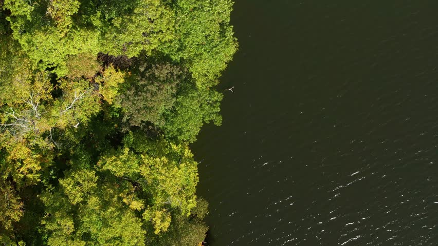 Birds eye view aerial drone footage of forest and river during Autumn foliage color | Shutterstock HD Video #1028794454