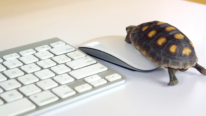 Turtle On Computer with Keyboard Stock Footage Video (100% Royalty-free)  1028839310 | Shutterstock