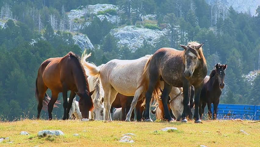 Horses graze on the pastures at mountain village #1028879240