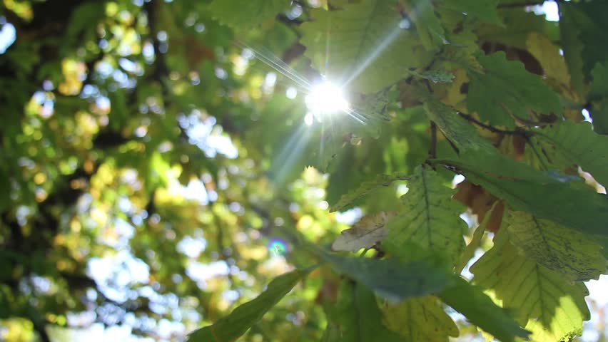 Leaves and ray of sunshine | Shutterstock HD Video #1028882909