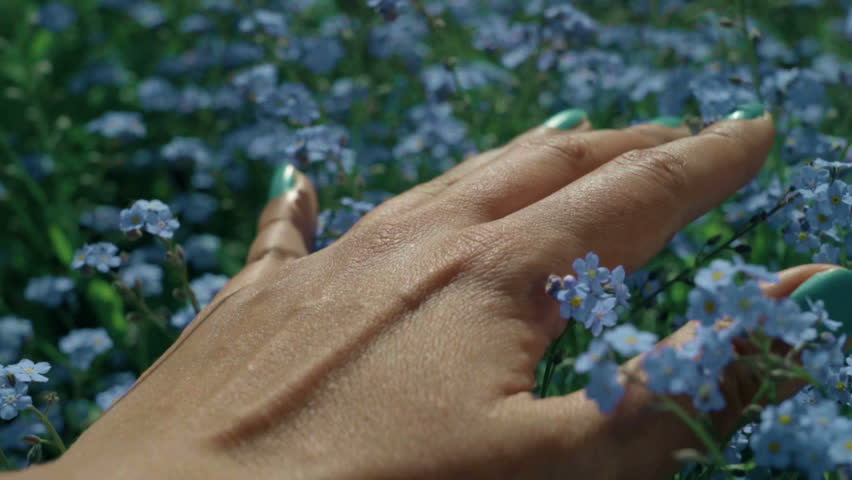 Close-up of woman's hand touching beautiful blue forget-me-not flowers. Feeling the wonderfull world through the skin. Tactile sensations | Shutterstock HD Video #1028977484