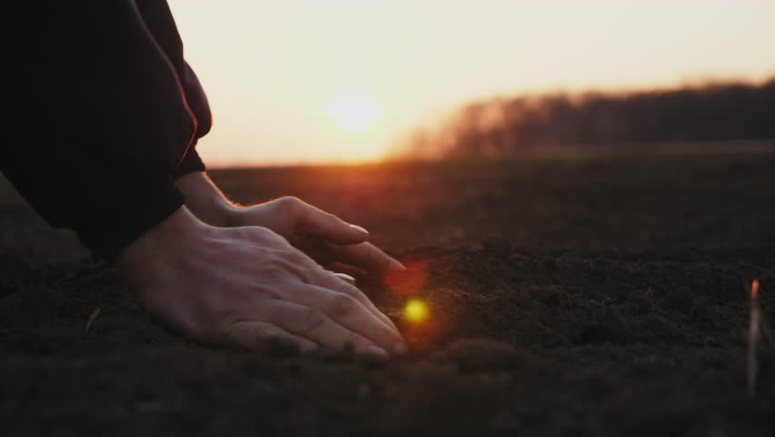 Side view: Farmer holding ground in hands close-up. Male hands touching soil on the field. Farmer is checking soil quality before sowing.