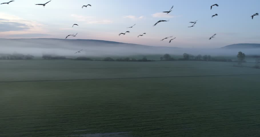 Storks flying to the camera, Jura / France | Shutterstock HD Video #1029353489