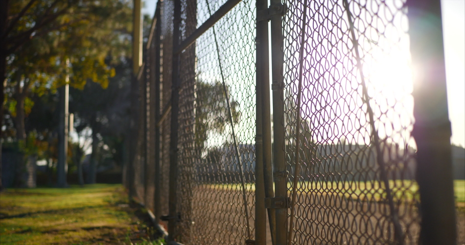 Rising up along a chain link fence gate with locks on it at sunrise outside of a grass baseball field in a public park.