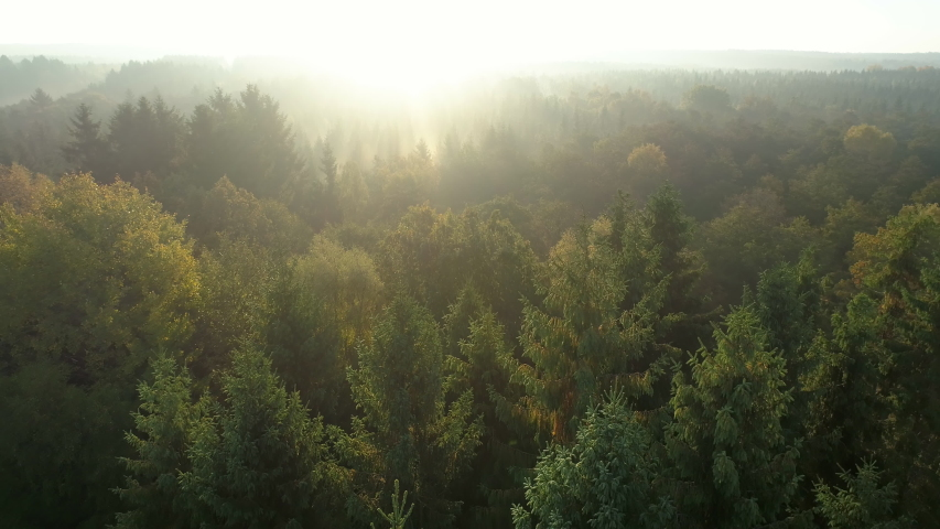 Aerial view of sunrise over misty morning forest flight. Drone shot flying over foggy European green pine and deciduous trees in the autumn. Majestic fall nature background in 4K resolution