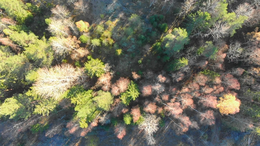 Drone footage, top.view, of a colourful autumn forest. Filmed in realtime at 4k | Shutterstock HD Video #1029507215