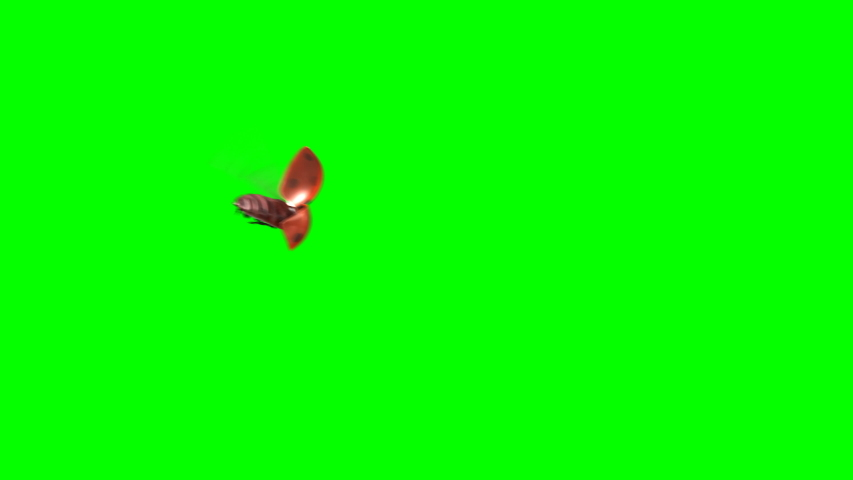 Ladybird Lands on a Green Background, 3d Animation