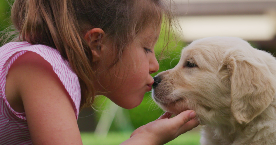 Slow motion of little girl lying on the lawn of a garden is cuddling and kissing a puppy of golden retriever dog.