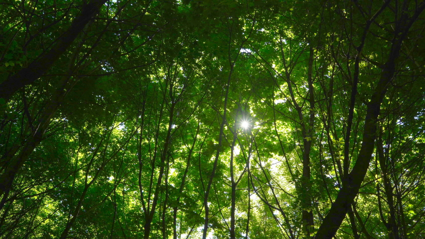 Morning in the park, the sun's rays breaking through the leaves of trees | Shutterstock HD Video #1029897110