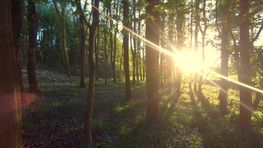 Cinematic Spring Sunlight In Forest With Bluebells And Trees, Calming 4K. Royalty-Free Stock Footage #1029954452