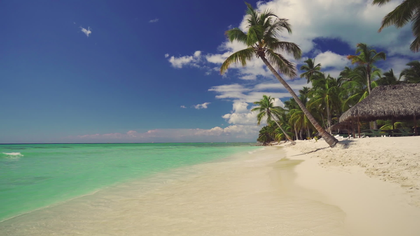 Exotic island. Coconut palm trees and tropical beach. Summer holiday on the Caribbean.   Shutterstock HD Video #1029967826