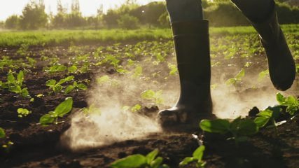 Farmer walking on the field in rubber boots. Dust rises, slow motion. Close-up video