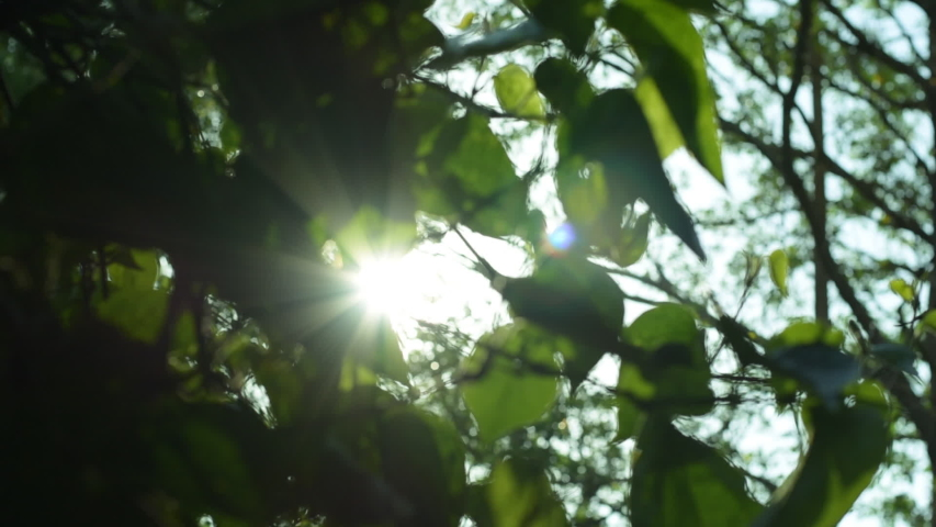 Leaves illuminated by sun light, natural background | Shutterstock HD Video #1030158596