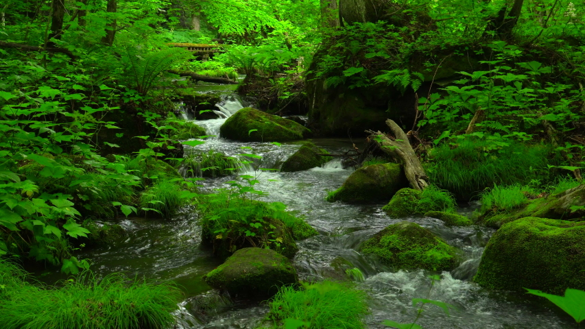 Mountain stream / Oirase Stream | Shutterstock HD Video #1030177697