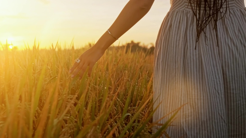 SLOW MOTION CLOSE UP LENS FLARE Female hand touching beautiful wheat at gorgeous golden light morning. Woman caressing crops growing on organic farm in Tuscany, Italy. Plants swaying at dreamy sunrise | Shutterstock HD Video #1030193468