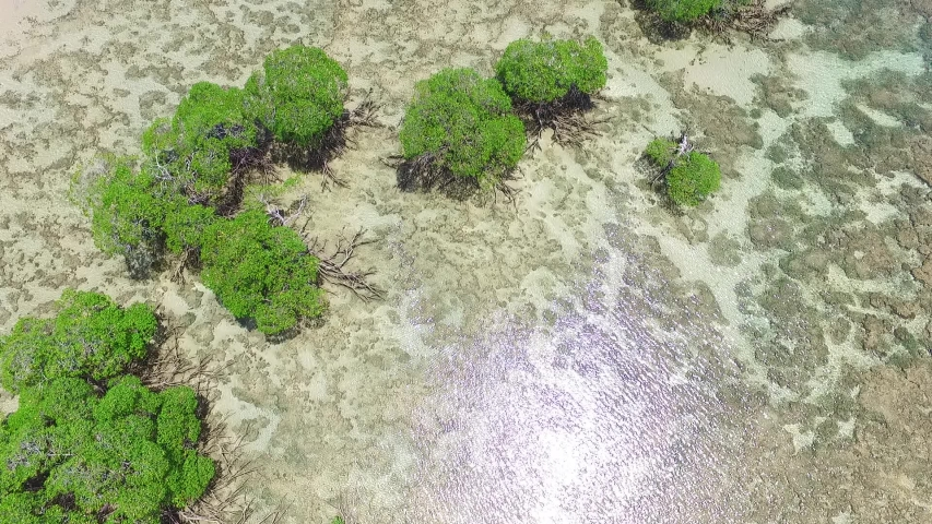 Aerial view of a transition zone between two ecosystems in Boipeba, Bahia, Brazil | Shutterstock HD Video #1030265159
