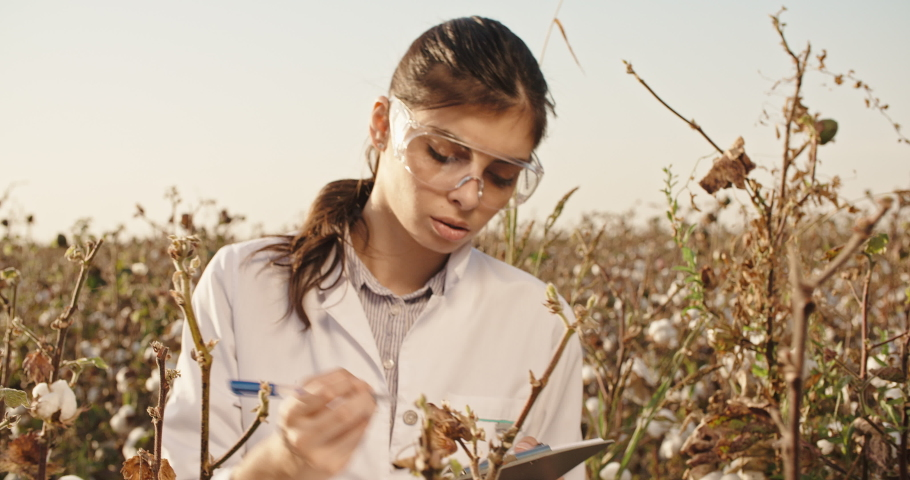 Young female agronome, wearing white lab coat, in blooming field of cotton, checking the quality of tufts, and taking notes - agriculture, ecology concept 4k | Shutterstock HD Video #1030287491