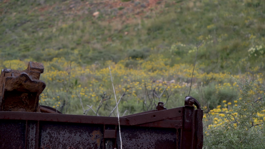 Abandoned, old and rusty trucks with flowers and plants growing out of them,