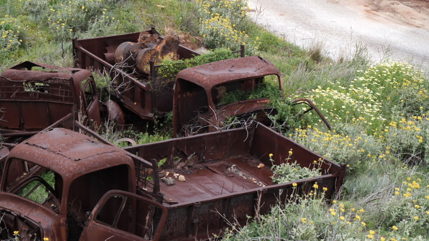 Abandoned, old and rusty trucks with flowers and plants growing out of them.
