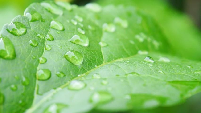 rain drops on the leaf #1030355618
