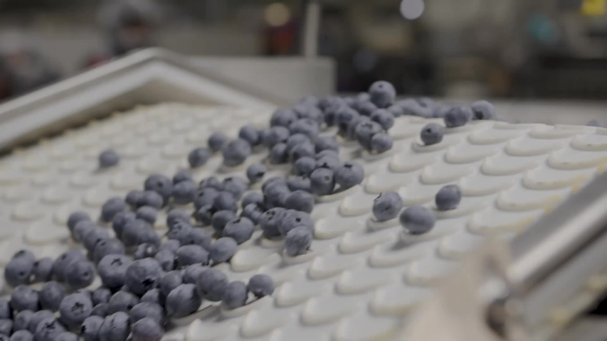 A Blueberry Processing and packaging Plant | Shutterstock HD Video #1030357595