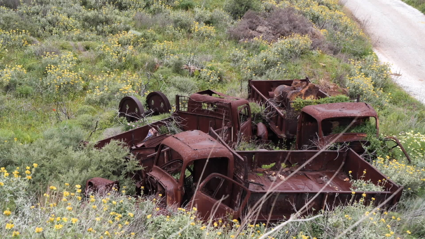 Abandoned, old and rusty trucks with flowers and plants growing out of them, on the side of the road, above them