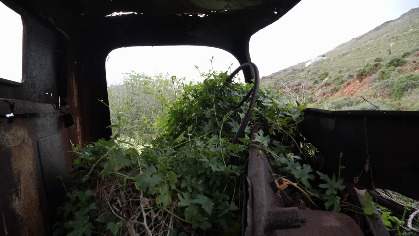 Abandoned, old and rusty trucks with flowers and plants growing out of them, looking in the front