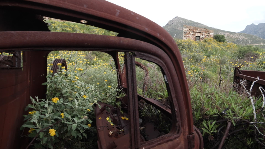 Abandoned, old and rusty trucks with flowers and plants growing out of them, tracking along the back of the pick-up