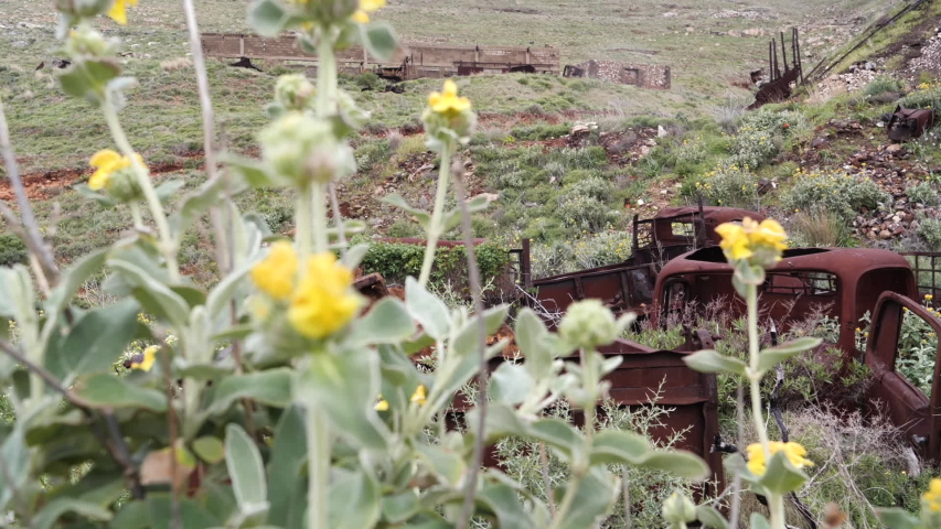 Abandoned, old and rusty trucks with flowers and plants growing out of them, ing past yellow flowers