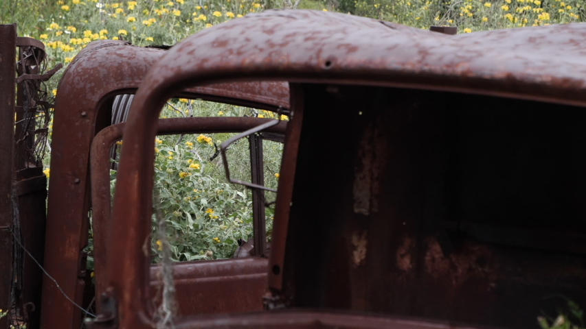 Abandoned, old and rusty trucks with flowers and plants that are overgrown inside and on them