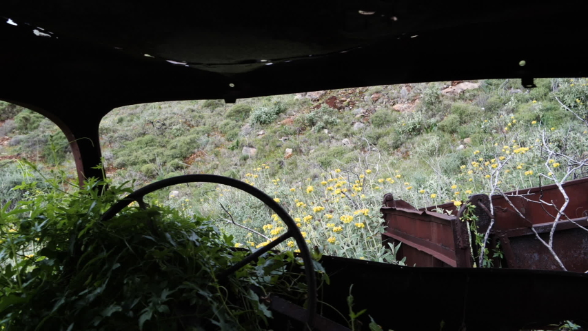 Abandoned, old and rusty trucks with flowers and plants growing out of them, back of the drivers seat tracking shot