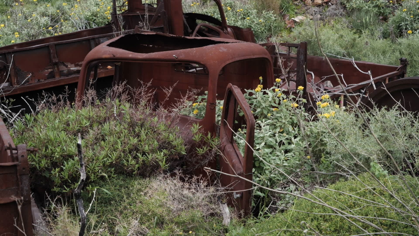 Abandoned, old and rusty trucks with flowers and plants growing out of them, front on view