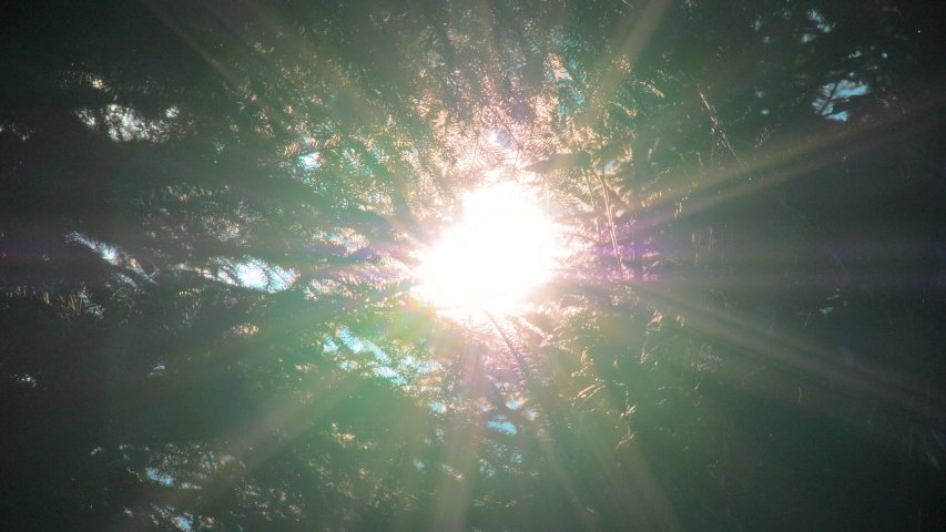 Beautiful meditative relaxing deep green forest sunshine trees low angle dolly nature sunny summer sun rays shimmer. The sun shines through the green leaves of a tree
