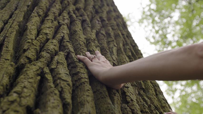 Hand touching old majestic oak tree | Shutterstock HD Video #1030443701