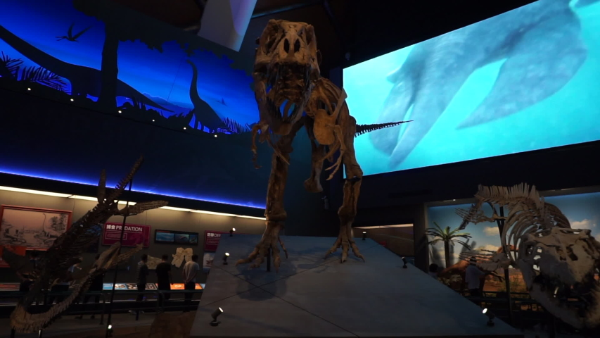 Tianjin/China-May 29,2019: people are watching dinosaur fossil and specimen in China Ocean Museum.  It is the largest museum about Ocean ecology and marine civilization in China. #1030447442