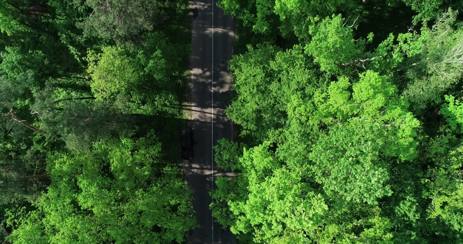 Cars ride along the road between trees in the woods | Shutterstock HD Video #1030525766