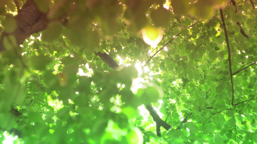 Sun Through Leaves With Lens Flare | Shutterstock HD Video #1030707170