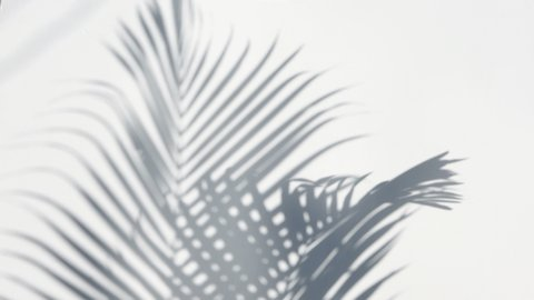 Palm Trees Stock Video Footage 4k And Hd Video Clips Shutterstock Lovepik provides 61000+ tropical leaves photos in hd resolution that updates everyday, you can free download for both personal and commerical use. closeup the motion of shadow palm leaves on a white wall background