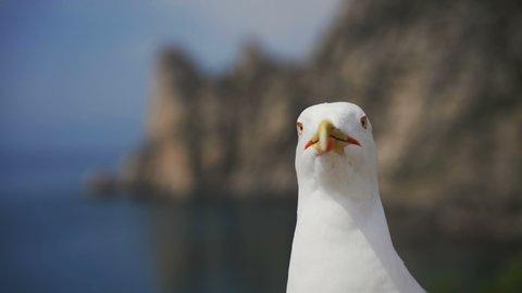 Seagull portrait against sea shore.