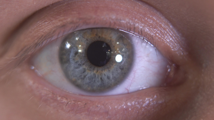 Close up of beautiful gray eye of human. Macro detailed shooting. The guy blinking slowly, looking in camera   Shutterstock HD Video #1031176370