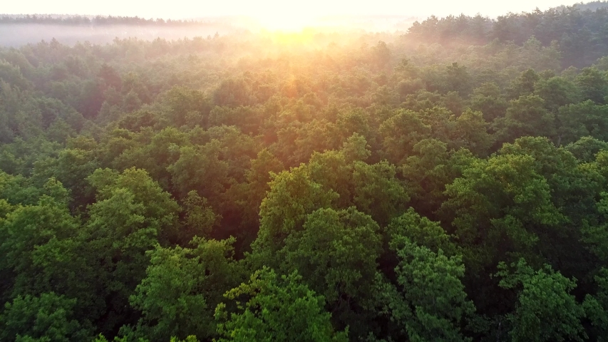 Flying over green trees forest at sunrise. Morning sun and fog. Aerial shot, 4K | Shutterstock HD Video #1031227805